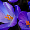 Flowers : 1 gallery with 97 photos